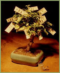 The Mythical Money Tree?